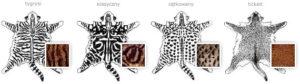 gen-ticked-wzory-pregowania